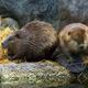 Beaver Dam Stroll