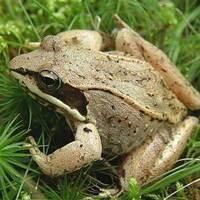 Frog Call Bingo