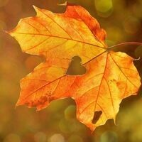 A fall leaf with a heart in the center