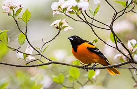 Birds and Blooms in the Arboretum
