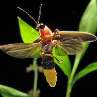 DiscoverE: Lightning Bug Crafts for kids Preregistration required