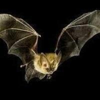 Batty About Bats