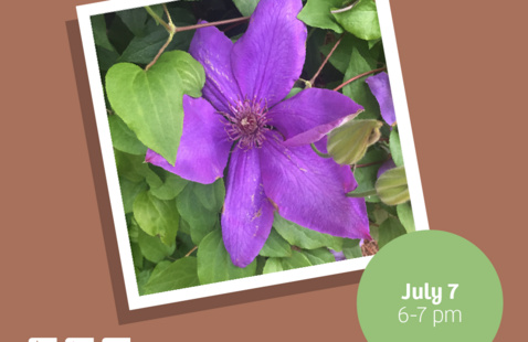 """Brown background with an image of a purple flower that reads: """"Popular Plants July 7 6-7pm For ages 4+"""""""