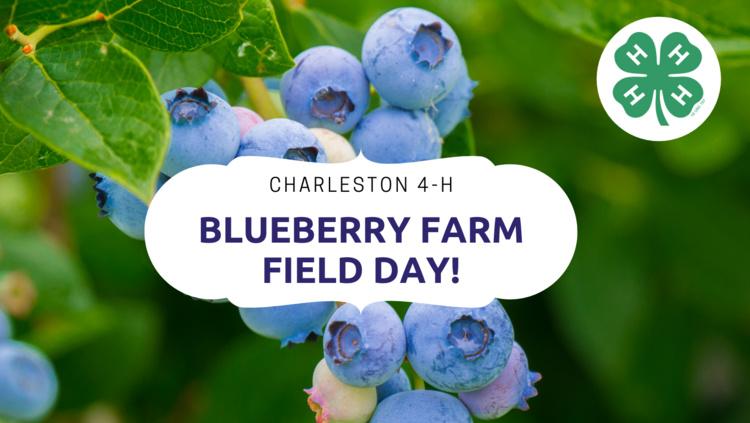 4-H Blueberry Farm Field Day