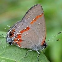 Butterflies of Jacobsburg