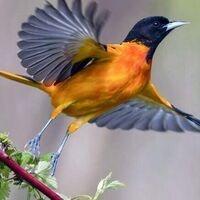 Spring Birding Excursion