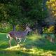 Get Outdoors Event Series: Backyard Critters