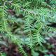 Wednesday Walk - Tree ID