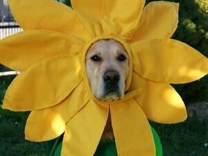 Heavens To Betsey Annual Animal Rescue Flea Market Fundraiser