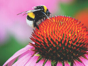 Planting for Pollinators a Green Lunch & Learn