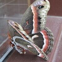 Moths of Keystone