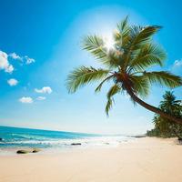 FTIC Shell Island Trip
