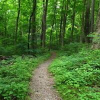 Hiking Hicks Hollow Trail