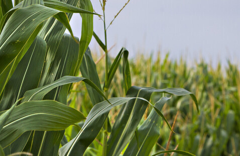 Greenley Research Center Field Day