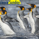 Virtual Science Sunday — Marine Mammals and Seabirds of the Southern Ocean