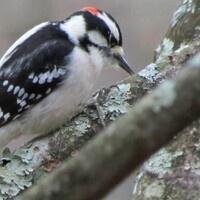 Virtual Story Time - Wham Woodpecker
