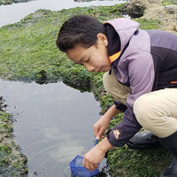 A young teen boy collects marine organizims at a tide pool using a small net.