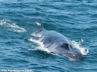 Whale Watching off Montauk