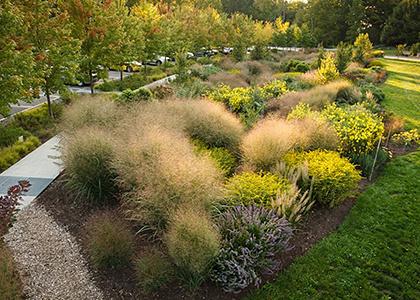 Plant Sociability in the Bioswale Garden