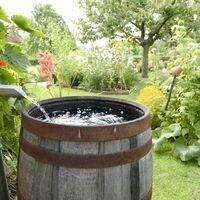 Watering for a Healthy Landscape Workshop via Zoom