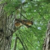 Discover Mammals! (Jr. Naturalist 2 series)