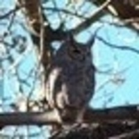 Owl Prowl!