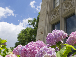 photo of summer flowers in front of the Cathedral of Learning