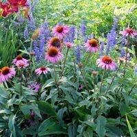 Fall Gardening:  Perennials - The Garden's Foundation