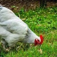 Take & Make: Farmyard Animals Magnets