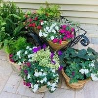 Keeping Your Garden Looking Good Workshop via Zoom