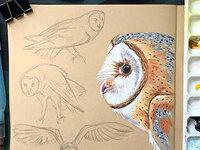 Free Webinar: In the Studio with Scientific Illustrator Liz Clayton Fuller