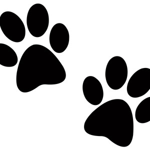 Paws for Stress Relief