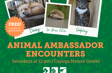 Animal Ambassador Encounters