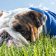 Bulldog Days of Summer
