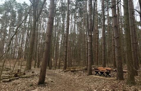 Red Pines, Pokagon SP