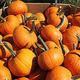 Take & Make: Pumpkin Painting