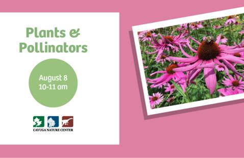 Eco-Explorers Series: Plants & Pollinators