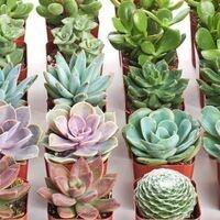 Arnett Hall | Make Your Own Succulents