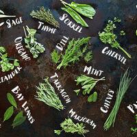 Take & Make: Hidden Harvest