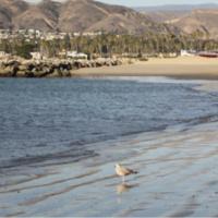 Plein Air Painting - Harbor Cove Beach