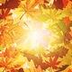 Take & Make: Leaf Impressions
