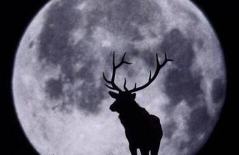 buck in moonlight