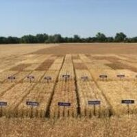 Wheat Pre-Plant Meeting