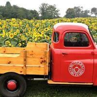 Butler's Orchard Sunflower Spectacular