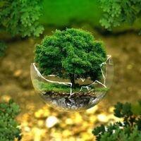 a tree growing inside a broken glass ball