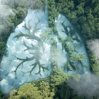 Lungs filled with trees