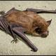 """Season of the Bat"" Video"
