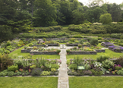 Handy Plants: An Herbal History Tour