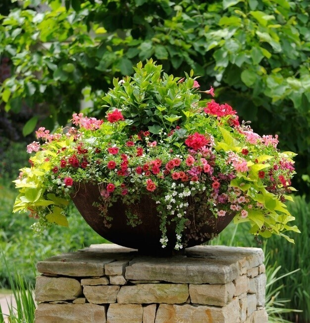 Lunch and Learn with Clemson Extension: Container gardening