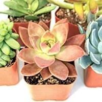 Quick Craft Night: Succulent Planting